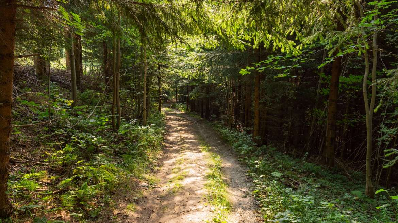 Using Nature to Awaken the Higher Self